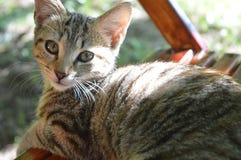 Cat, animal, pets, sweet, log cabin, stock images