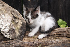 A cat. A little bicolor baby cat Stock Photo