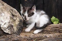 A cat Stock Photo