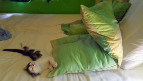 Cat. Little cat sleeping like a baby Stock Image