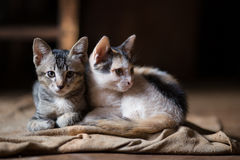 Cat,A little cats,Twins cats stock photos