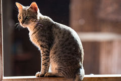 Cat,A little cats,Twins cats royalty free stock images
