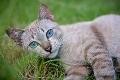 Cat. Little cat, kitten, cats eye Royalty Free Stock Photos