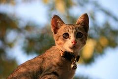 Cat. Little kitten on green background Stock Photo