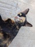 Cat. Little cat  Mæw n̂xy  Little kittens Royalty Free Stock Photography