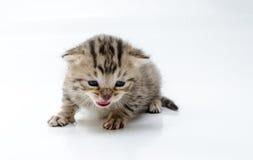 Cat. Little newborn kitten. On white background Stock Photos