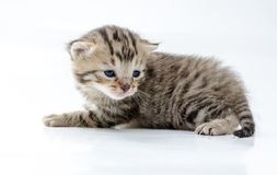 Cat. Little newborn kitten. On white background Stock Photo