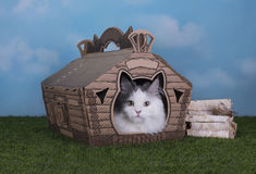 Cat lives in his own house in the village Stock Images