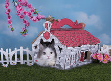 Cat lives in his own house in the village Stock Photo