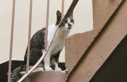 A Cat living in the City Royalty Free Stock Image