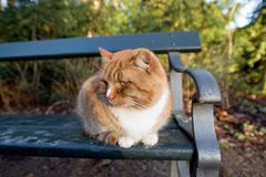 Cat living in Frederiksberg garden, Copenhagen, Denmark stock photography