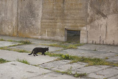 Cat living in port Royalty Free Stock Image