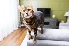Cat in the living room on the couch. A Cat in the living room on the couch Stock Photography
