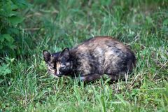 Cat living on the rural yard Royalty Free Stock Photography