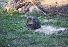 Cat living on the rural yard Royalty Free Stock Images