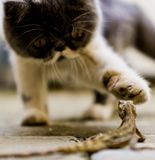 Cat and Lizard stock photography