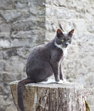 Cat on a log Stock Photos