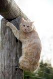 Cat on a log Stock Photos