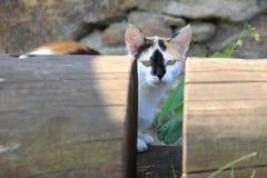Cat between logs. Stock Image