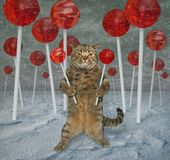 Cat in the lollipops forest royalty free stock photo