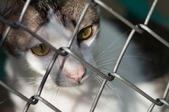 A cat. A lonely cat with brown eyes staring out from a cage Royalty Free Stock Images