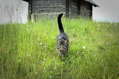 Cat in the long grass and the hut on the hill Royalty Free Stock Photo