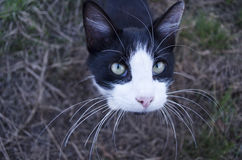 Cat With Long Whiskers Stock Photography