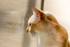 Cat Looing Outside Stockbild