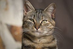 Cat. The look of a cat Royalty Free Stock Photography