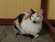 Cat. Look of beauty colored cat Royalty Free Stock Photo
