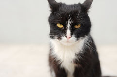 Cat Look Royalty Free Stock Image