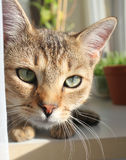 Cat look Royalty Free Stock Photos