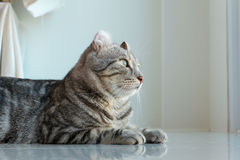 Cat. The Cat Look forward From home Royalty Free Stock Image