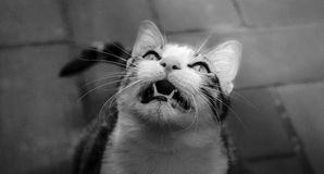 Cat look Stock Photography