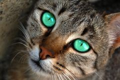Cat look Royalty Free Stock Photos