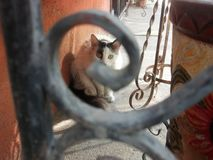 Cat look Stock Image