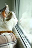 Cat look throuth the window close up photo Royalty Free Stock Photos