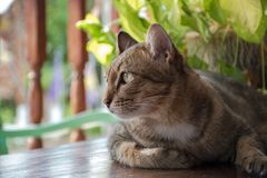 Cat look to out door stock images