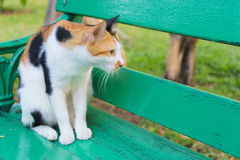 Cat looked through the chair Royalty Free Stock Photo
