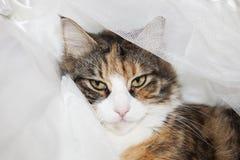 Cat Looking stock afbeelding