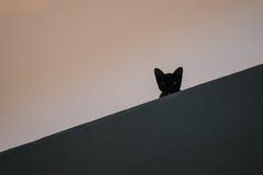 Cat Looking Imágenes de archivo libres de regalías