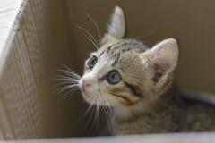 Cat Looking Immagini Stock Libere da Diritti