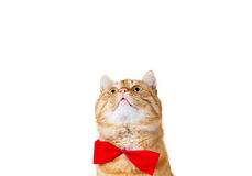 Cat Looking foto de archivo libre de regalías