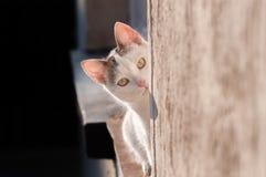 Cat Looking stock fotografie