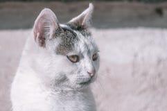 Cat Looking Immagine Stock Libera da Diritti