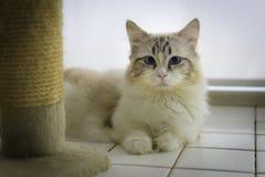 Cat Looking Stockbilder