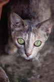 Cat Looking Imagens de Stock