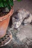Cat Looking Imagens de Stock Royalty Free