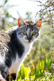Cat looking. Wild cat looking at the camera between the vegetation Stock Image