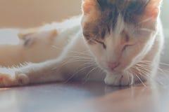 Cat Looking fotografering för bildbyråer